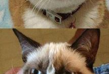Grumpy cat, she is my favorite :)! / by Irina Wilkie