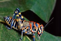 colourful insects