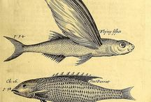 Traditional Science Illustration