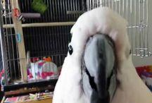 přehrávat videa ptáčků