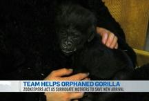 Orphaned baby animals