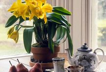 I  <3 Orchids