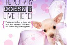 Pet Friendly Apartments in Savannah, GA