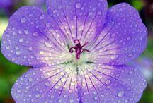 Blomster / Blomster fotografi
