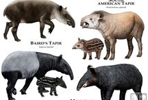 Tapirs, Giraffes and Capybaras / My favorite zoo animals of all time!