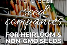 Growing Heirlooms / All you need to know about growing heirlooms, from grafting and seed saving to propagation, pruning, and harvest tips.