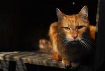 Psy i koty / Psy i koty są pod opieką Ani w przydomowej kociarni i boksach.