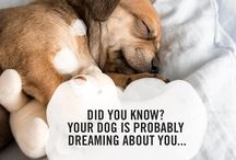 Pet Facts / Check out some of these interesting and far-out facts about pets.