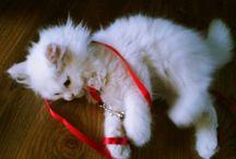 Nami / Kitten
