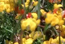 Flores Vivas 2MP