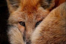 Foxy Foxes / All for you, Jessica! / by Monica Borg