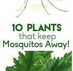muggenvrije tuin