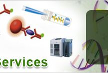 Immunochemistry Services / Immunochemistry Services: Bio-Synthesis, Which offers lmmunochemistry services at affordable cost with 100% client satisfaction.
