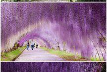 Japanese garden idea