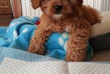 My dream dog ❤️