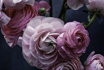 + fiori / more flowers please