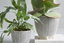 Plants and Botanical