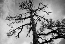 Black & White / by Marlee Huber