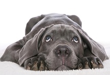 Animals - Cute Critters / ANIMALS! Cute puppies, dogs, canines, kitty cats, and critters. / by ArenaCreative.com Stock Photos ♨