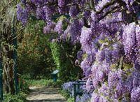 Landscaping / DIY home improvement, DIY landscaping, DIY gardening, gardening ideas, landscape plans