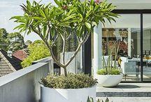 växter för terass och uterum torktåligt