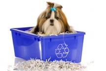 Green Pets / Ideas for eco friendly pets.  DIY, Foods, Toys, Non Toxic, Tips for a healthier pet / by PLANETPALS ♥ EARTH