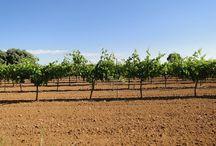 Sercopag / Empresa de servicios agrícolas y productos fertilizantes, abonos y fitosanitarios.