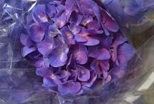 Post Harvest Flowers - April 16, 2013