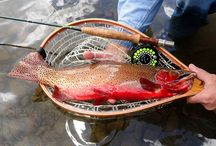 COLORADO RIVER CUTTHROAT / Fly fishing for Colorado River cutthroat.  Colorado River cutthroat on the fly.
