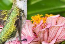 stunning beauty of hummingbird