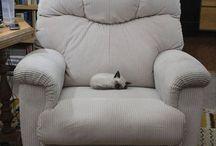 gatito sofa