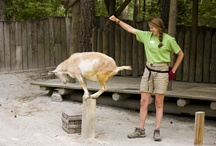 Farmyard Animals / by Stone Mountain Park