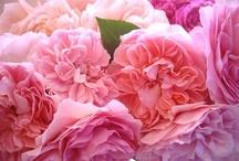 floral / by Denise Stevenson