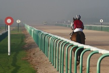 Horse Racing Pictures  / My favourite racing pics from around the UK