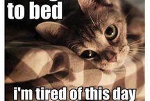 Crazy & Cute Cats