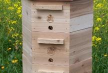 Včelky / Vše kolem včel
