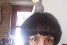Instagram https://www.instagram.com/p/BQBa2wrBkH9/ February 02, 2017 at 03:12PM #birds #cockatiel Grayson