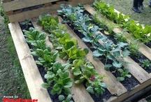 Palettes jardin