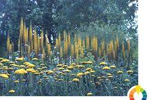Perennial plants / Perennial planting combinations
