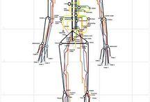Физиология
