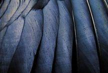 Palette || Navy Blue