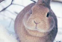 • Bunny •