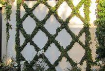 Fence Frenzy