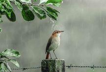 9 Manfaat Air Hujan untuk Burung Peliharaan