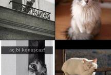Hayvanciklar