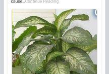 Dangerous Plant