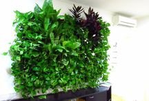 Green Walls @ Crisco / Green Walls @ Crisco
