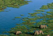 AFRICA (AFRIKA)