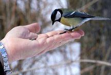 ptáčci zpěváčci / ptáci z našich krmítek