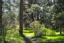 Trails in Pagosa Springs, CO